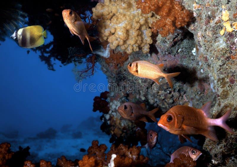 斐济鱼洞穴 库存图片