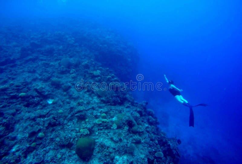 斐济Freediver 库存图片