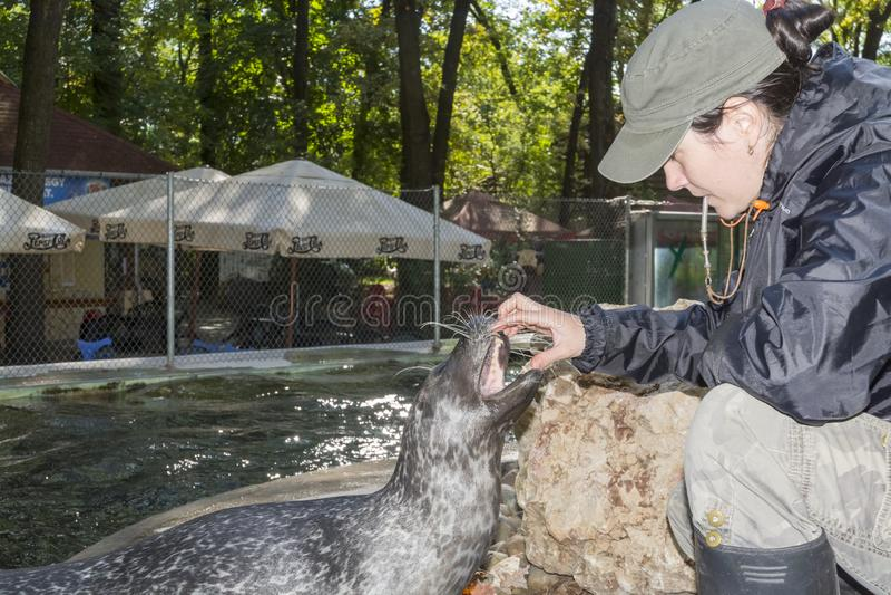 斑海豹训练 免版税库存图片