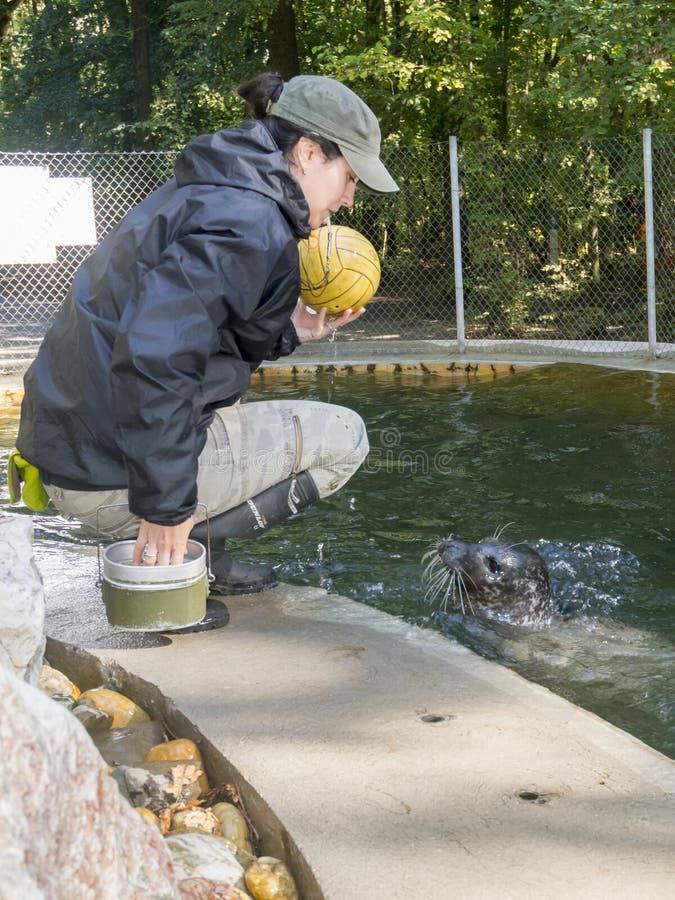 斑海豹训练 库存照片