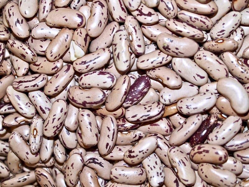 斑豆宏指令在市场上 免版税库存照片