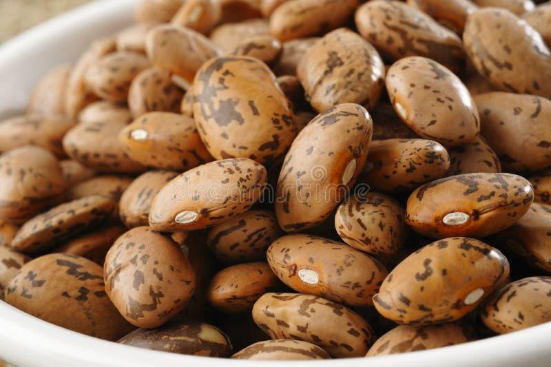 斑豆 免版税库存照片