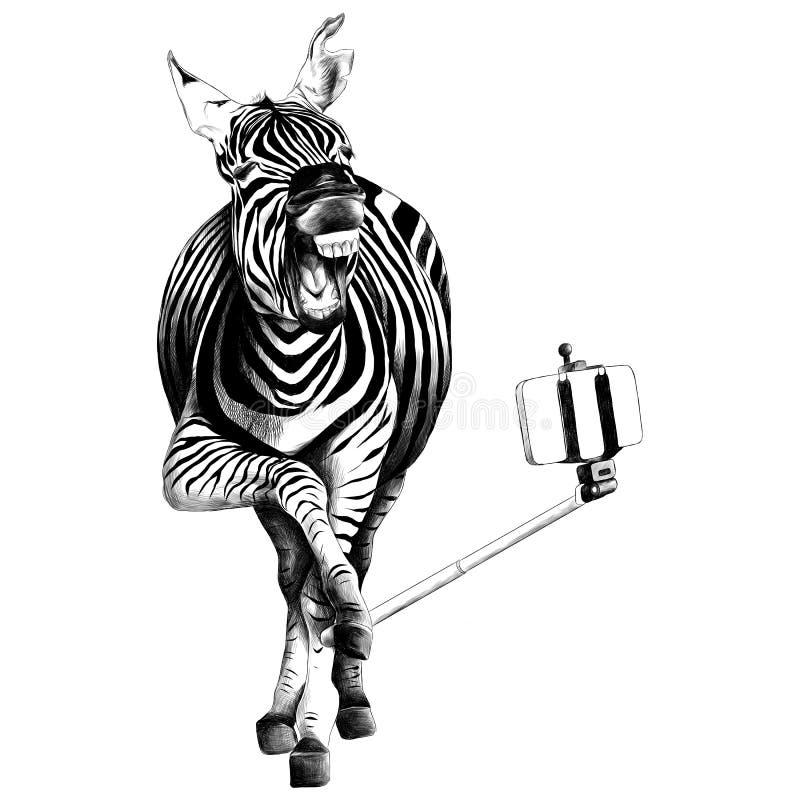 斑马剪影向量图形 皇族释放例证