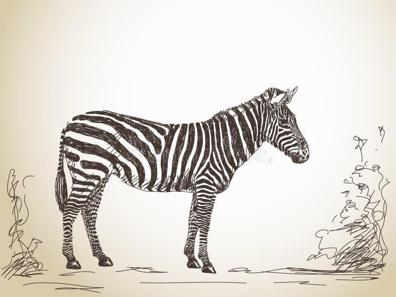 斑马剪影  向量例证