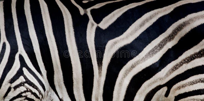 斑马印刷品,动物皮毛,老虎条纹,抽象样式,线 库存图片