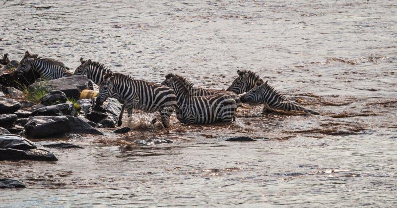 斑马和角马在迁移时从塞伦盖蒂马塞语的M 免版税库存图片