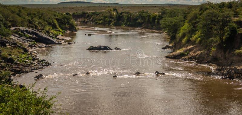 斑马和角马在迁移时从塞伦盖蒂马塞语的M 库存图片