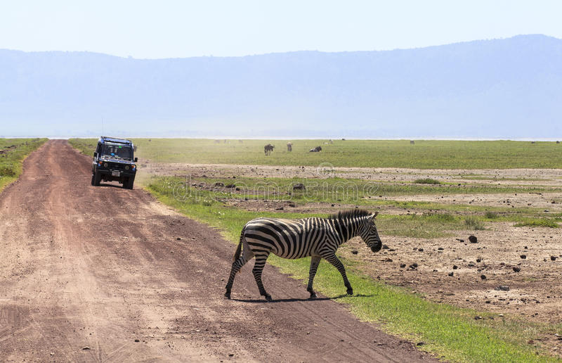 斑马在马赛马拉,肯尼亚 免版税库存图片
