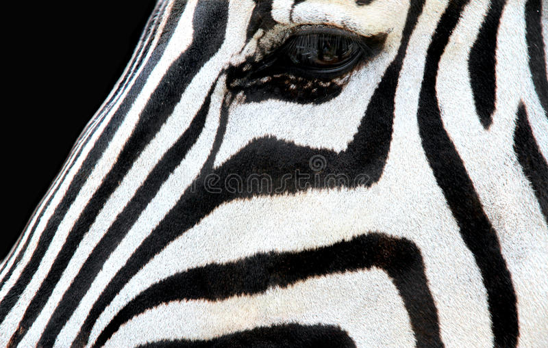 斑马面孔 免版税库存图片
