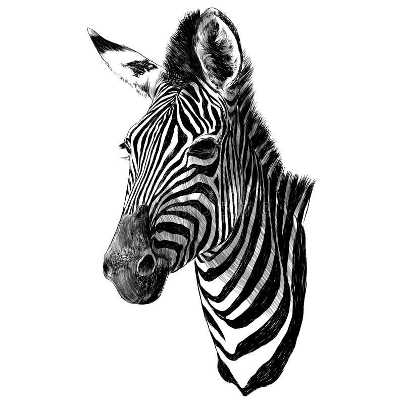 斑马顶头剪影向量图形 向量例证