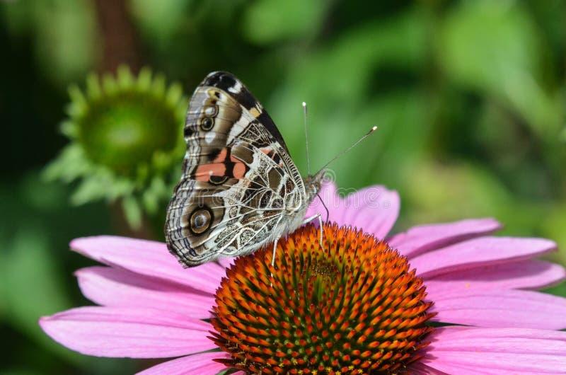 斑马蝴蝶 库存照片