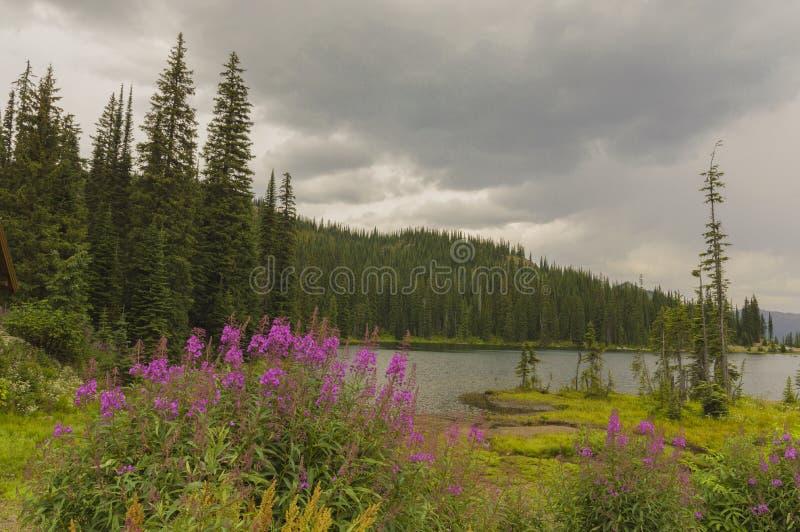 斑鳟属通行证的高山湖在Kootenays英国Culumbia加拿大 免版税库存照片