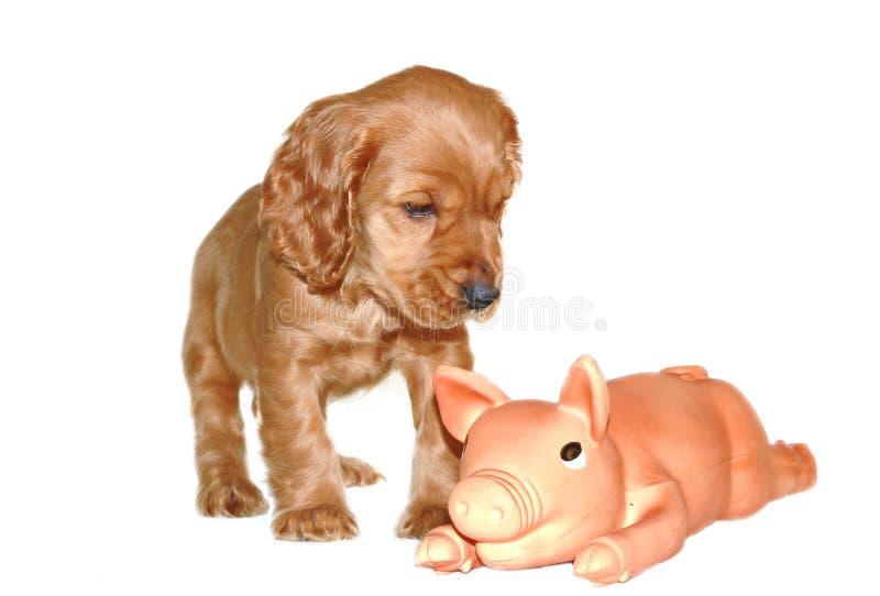 斗鸡家小狗西班牙猎狗玩具 库存图片