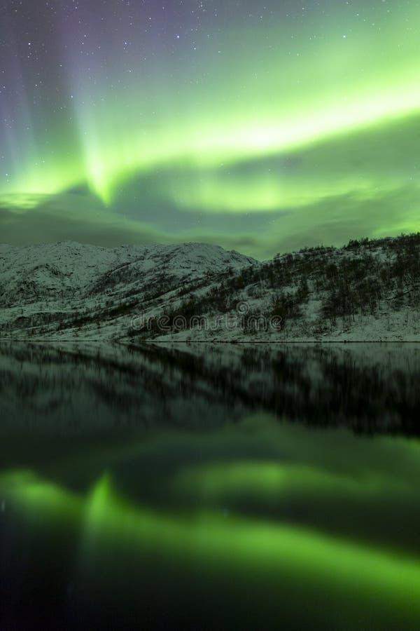 斯堪的那维亚画象北极光  免版税库存照片