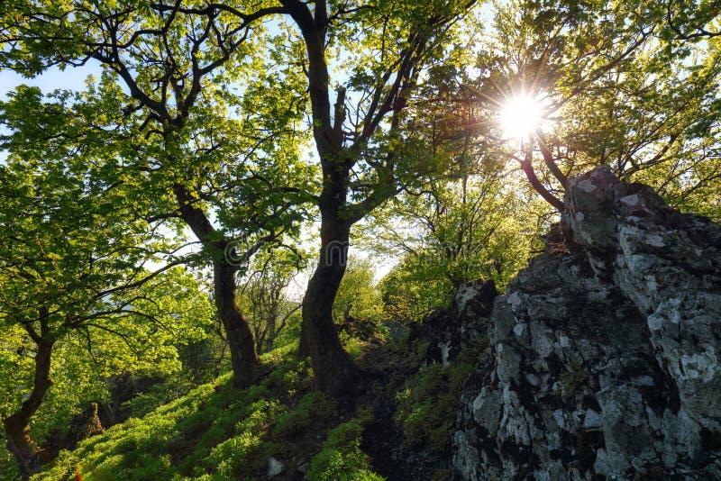 斯洛伐克喀尔巴阡山林 库存照片