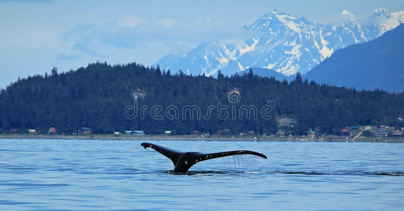 斯蒂芬斯段落鲸鱼观看 库存照片