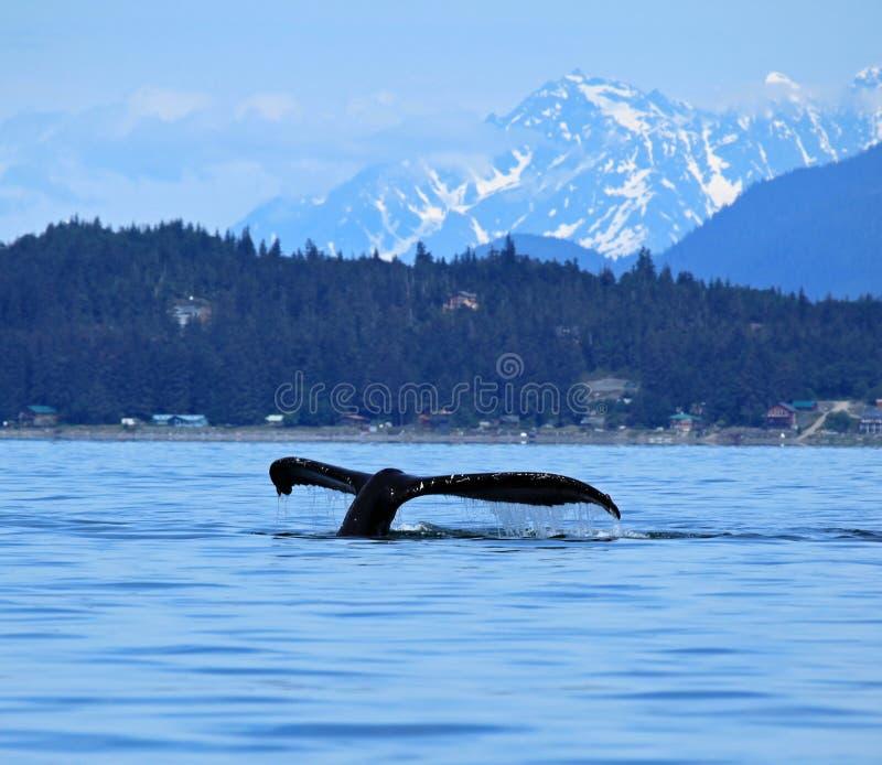 斯蒂芬斯段落鲸鱼观看 免版税图库摄影