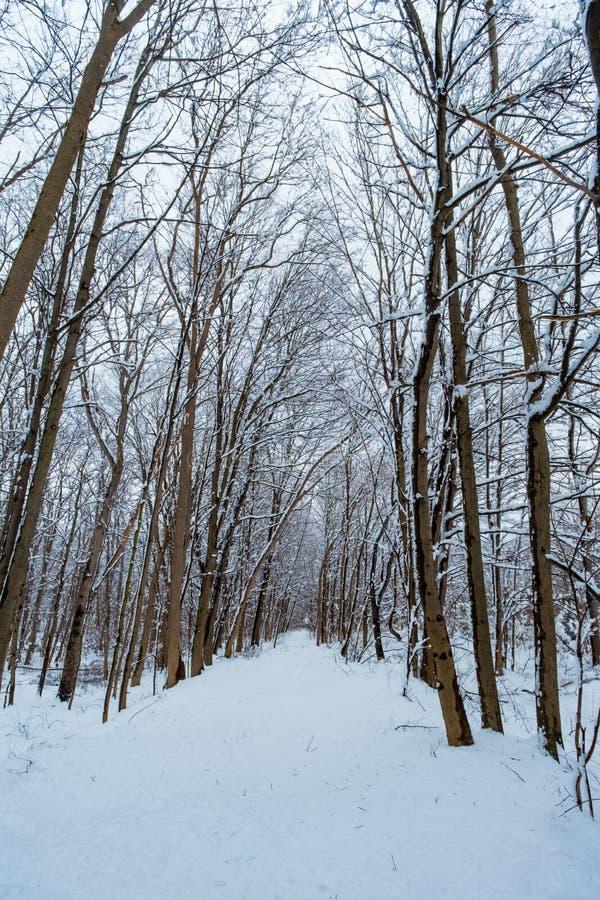 斯诺伊供徒步旅行的小道冬天 免版税库存照片