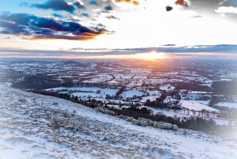 斯诺伊冬天与轻的大气渐晕的科茨沃尔德在前景的风景和绵羊 库存图片