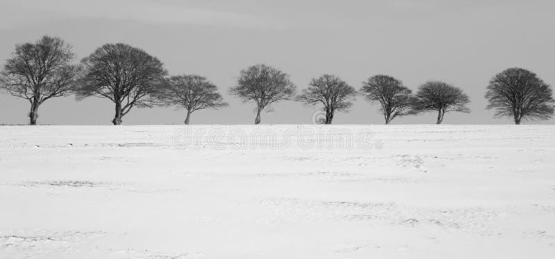 斯诺伊冬天在德文郡 库存照片