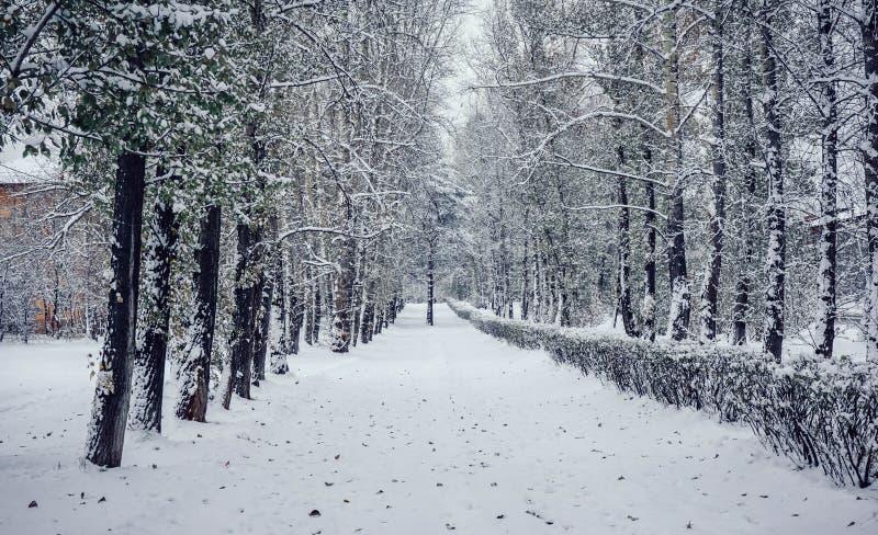 斯诺伊冬天在西伯利亚 俄国 库存照片
