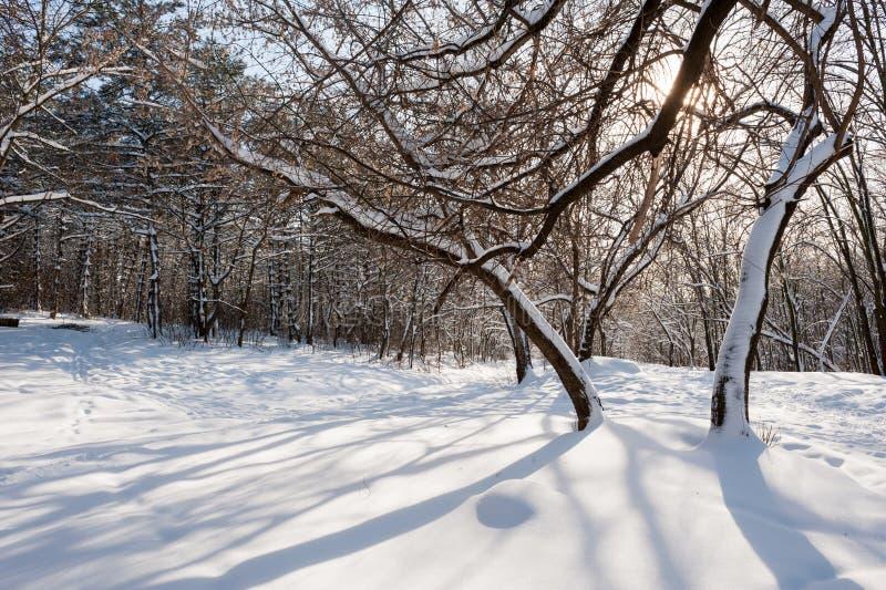 斯诺伊冬天森林 库存图片