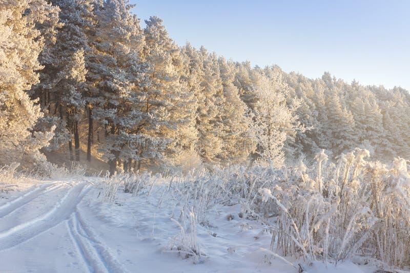 斯诺伊冬天横向 冷淡的自然 库存照片