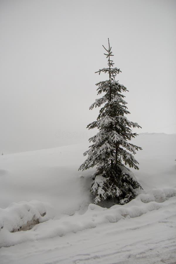 斯诺伊圣诞树在森林里 免版税库存照片