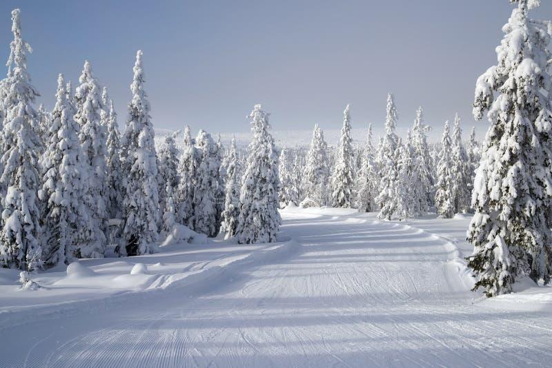 被变朦胧的滑雪轨道 免版税库存照片
