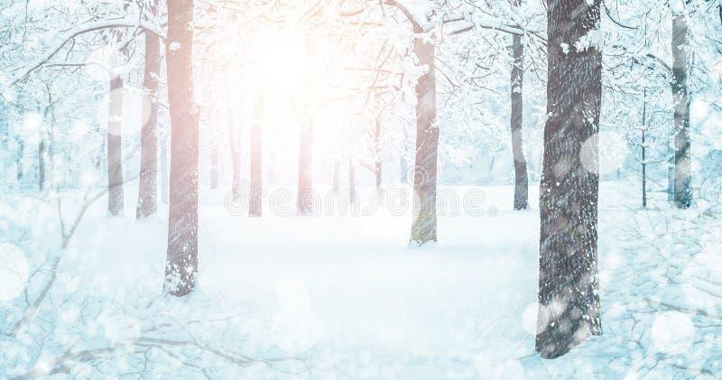 斯诺伊在冬天飞雪的森林风景 免版税库存图片