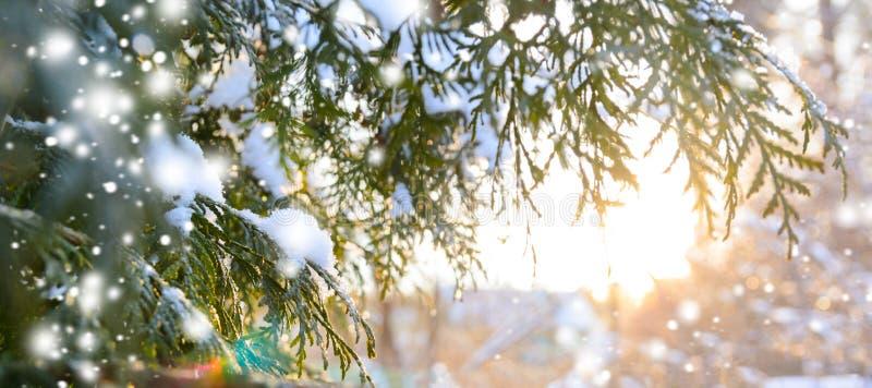 斯诺伊在日落的树枝 免版税库存图片