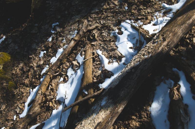 斯诺伊在森林里研了 免版税图库摄影