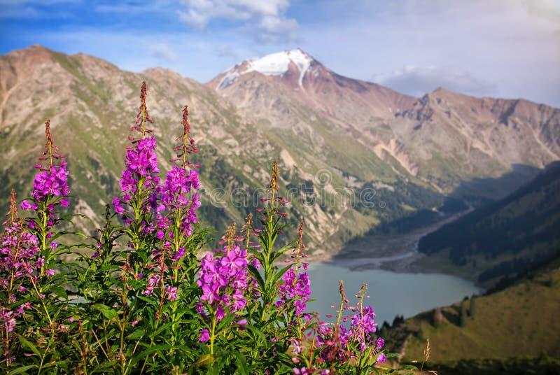 斯诺伊山和桃红色花 免版税库存图片