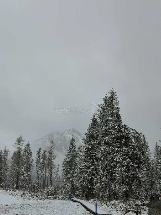 斯诺伊山,降雪森林道路,树 免版税图库摄影