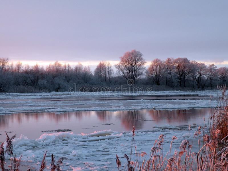 斯诺伊树临近河Atmata,立陶宛 免版税库存图片