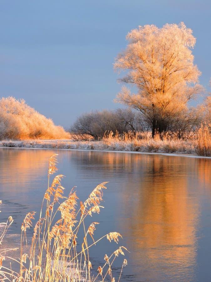 斯诺伊树临近河Aukstumala,立陶宛 免版税库存照片