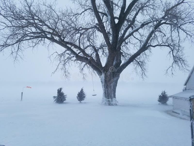 斯诺伊树国家雾冬天 库存照片