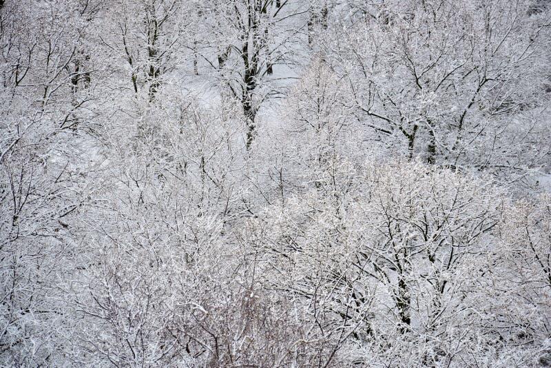 斯诺伊树在12月 免版税库存图片