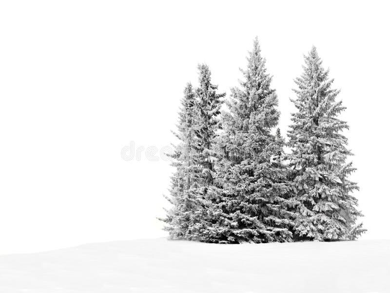 斯诺伊树 免版税库存照片