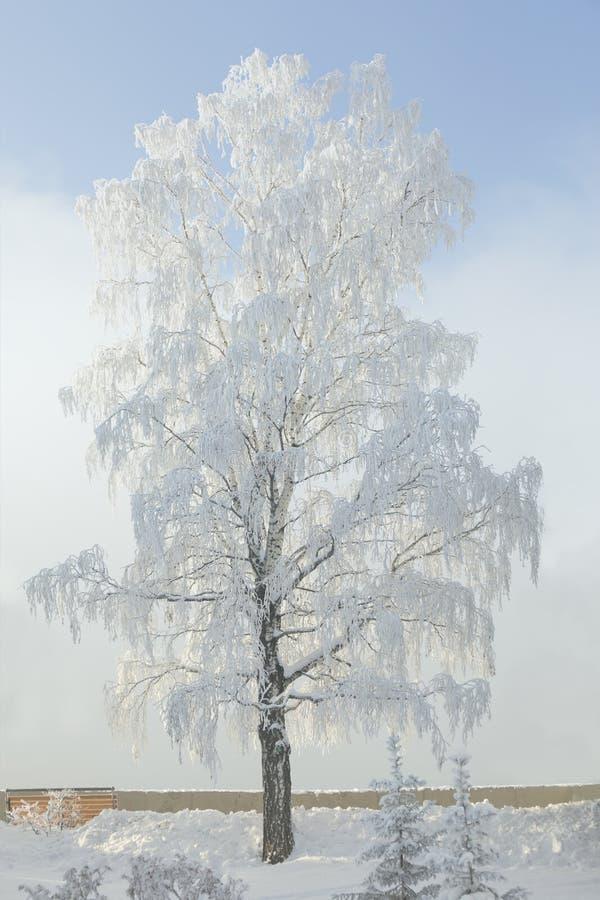 斯诺伊桦树 冬天霜树 12月风景 库存照片