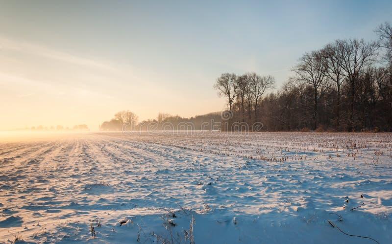 斯诺伊玉米亩茬地在低下午阳光下 免版税库存图片