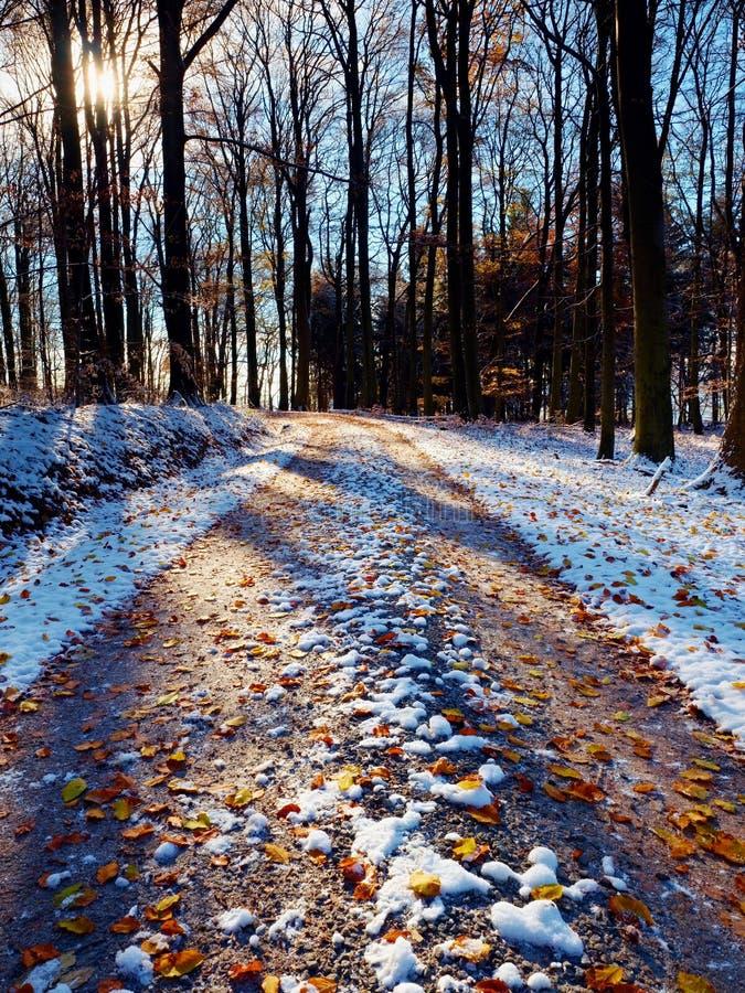 斯诺伊道路在山毛榉树下在早期的冬天森林里 库存照片
