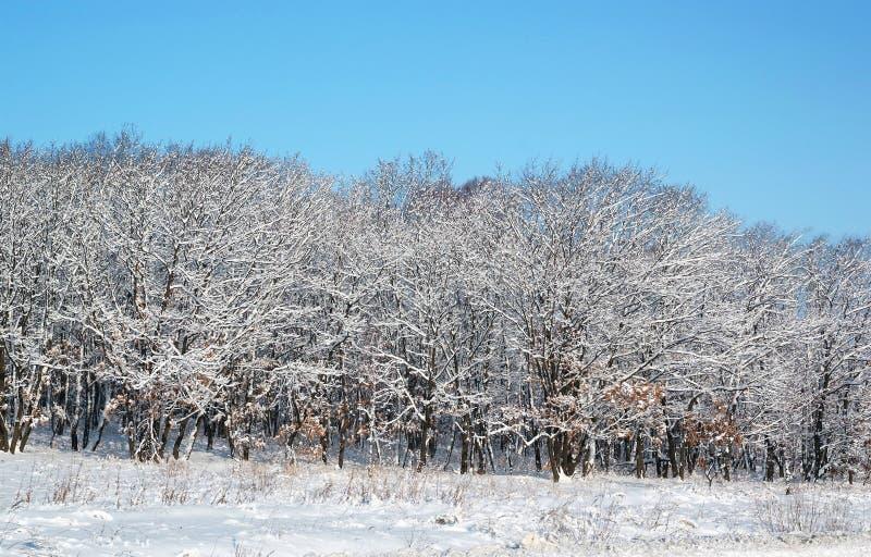 斯诺伊结冰森林冬天风景 库存图片