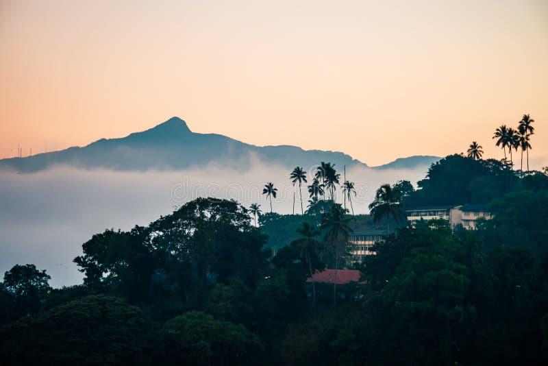 斯里兰卡与绿色树的风景视图 库存照片