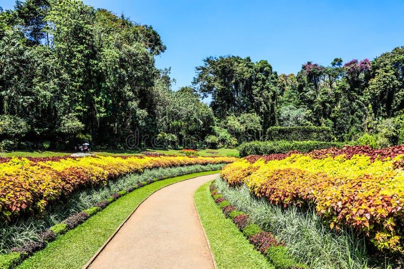 斯里兰卡康提皇家植物园 免版税库存图片