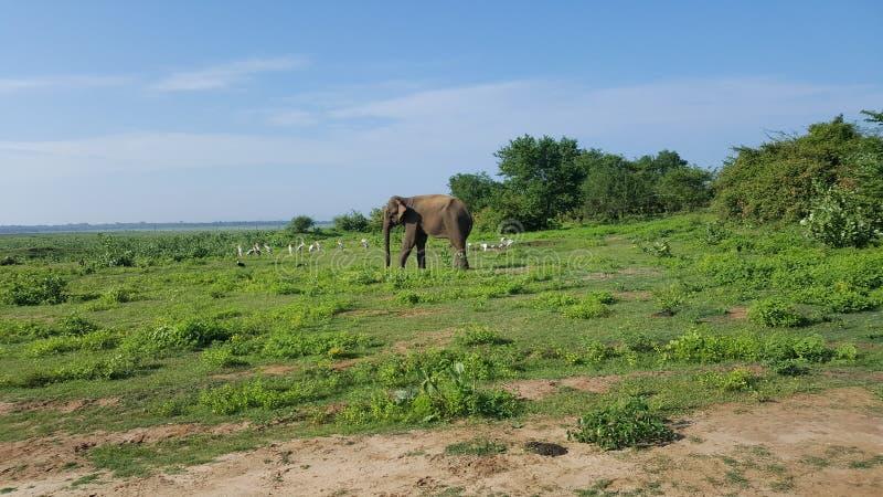 斯里兰卡徒步旅行队旅行 免版税图库摄影