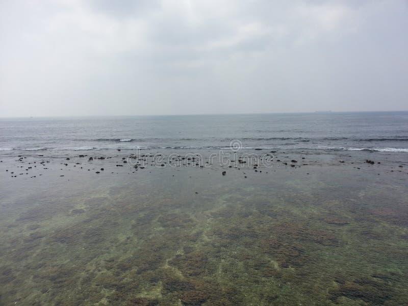 斯里兰卡的自然非常美好的珊瑚海线 免版税库存图片