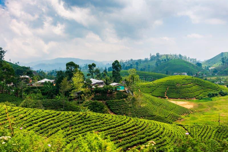 斯里兰卡高地的风景茶园 免版税图库摄影