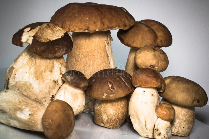 新健康家庭小组蘑菇等概率圆可食porcini的牛肝菌蕈类 免版税库存图片