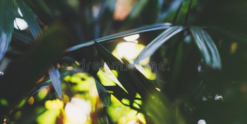新健康生物背景迷离自然与摘要被弄脏的叶子和明亮的夏天火光阳光背景在公园,警察 库存照片